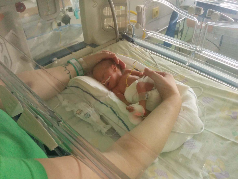 Jerca v inkubatorju